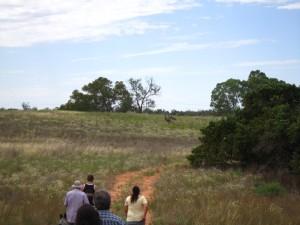 Emus ahead