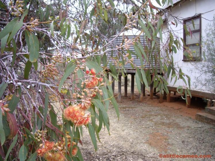 Millewa Pioneer Village